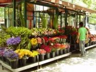 Nem todos podem visitar uma loja de flores física, esses compram pela internet.