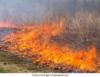 Embrapa estuda efeitos das queimadas na Amazônia