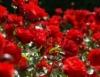 Conhecer o significado das flores é fundamental para quem está nesse mercado