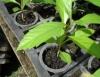 Cultivar plantas e flores ornamentais é opção rentável de negócio