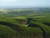 Produtores recebem renda extra de silvicultura