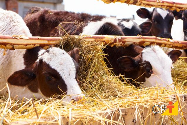 Gestão da pecuária leiteira