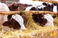 Sítio Cedro, modelo de gestão da pecuária leiteira