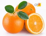 Cultivo orgânico de citros apresenta mercado em expansão