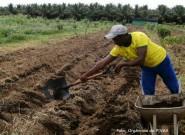 Programa para interpretação de análise de solo