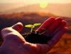 Hoje é dia do ruralista, confira as dicas sobre sustentabilidade ambiental no meio rural