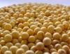 Cresce o número de lavouras de soja transgênica