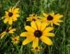 Medicina floral como método terapêutico