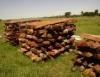 Secagem de madeira