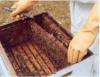 Monte um apiário, a produção de mel traz benefícios para sua vida