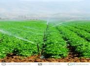 Irrigação: aspectos importantes