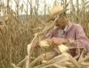 Produção de milho em pequenas propriedades