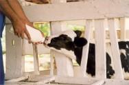 Vaqueiros treinados e que viabilizam uma produção de 200 mil litros de leite por ano.