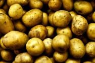 Para essa receita você vai precisar de 500kg de batata