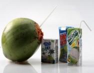 Água de coco é garantia de lucro para os produtores nacionais