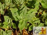Farmácia viva - as plantas medicinais