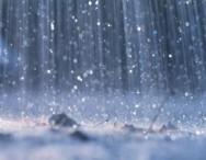 Chuvas de verão: o que fazer para proteger as plantas?