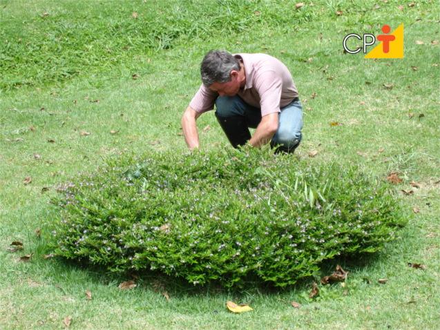 Treinamento de jardineiro