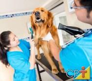 Como montar um pet shop - a importância dos serviços especializados