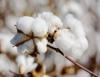 Ministro da Agricultura acredita em novo recorde nas exportações em 2012
