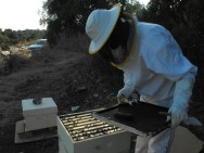 O projeto vai financiar todo o material e o conhecimento sobre a apicultura.
