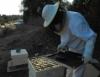 Criação de abelhas gera renda no Vale do Rio Doce