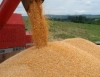 Governo investe R$1 bilhão para escoamento do milho