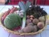 Como conservar frutas, legumes e verduras