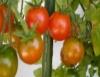 Novo pesticida natural