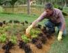 Outono é a estação ideal para o tratamento de jardins