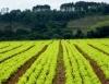 Sistema de irrigação por microtubos é mais eficiente para agricultura