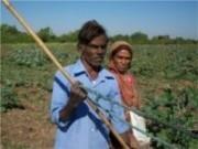 Agricultores já podem sacar a 1° parcela do auxílio agricultura familiar