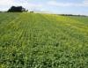 Agroindústria brasileira tem boas perspectivas de mercado
