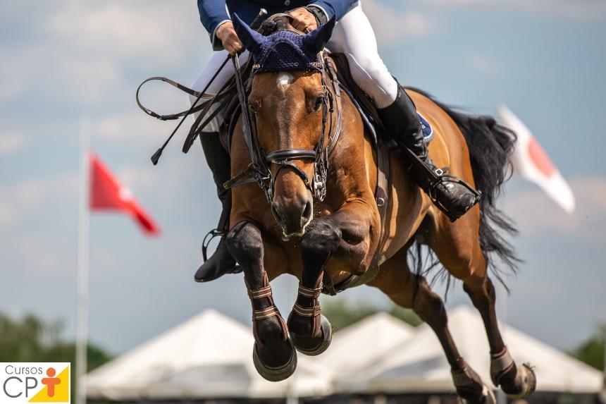 Provas equestres: a prova das seis balizas   Dicas CPT