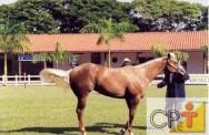 Provas equestres - a prova dos cinco tambores