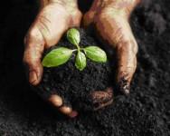 Aprenda Fácil Editora: O Mercado de Trabalho procura: Profissionais da Ecologia