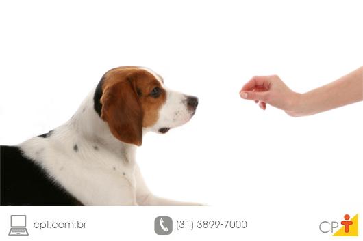 Como entender seu cachorro