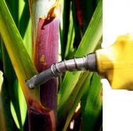 Aprenda Fácil Editora: 120 novas usinas de etanol devem ser construídas até 2020 no Brasil