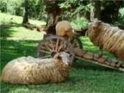 Evento reunirá e fortalecerá o setor de caprinovinocultura no país