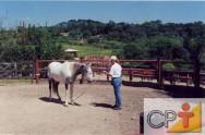Seleção e doma para equoterapia: a audição do cavalo
