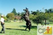 Enquanto o veterinário não chega - cuidados com o cavalo