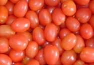 Fertilização natural em tomate orgânico