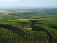 Aprenda Fácil Editora: Eucalipto pode aumentar renda do produtor rural
