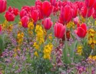 A Jardinagem e seus benefícios