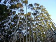 Aprenda Fácil Editora: Ministério do Meio Ambiente quer priorizar o plantio de florestas