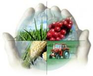 Passos do planejamento estratégico para a propriedade rural