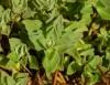 Segredo das plantas medicinais é revelado