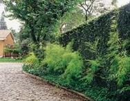 Muros e muretas são estruturas importantes na composição de jardins