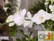Planejamento de jardins: cuidados ao regar