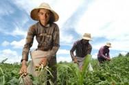 Cultivo de 15 produtos agrícolas receberá bônus